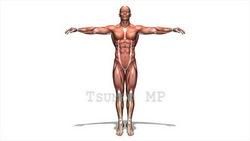 映像CG 人体模型120430-001