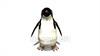 映像CG ペンギン Penguin120421-002