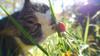 映像実写 ネコ Cat-016