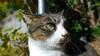 映像実写 ネコ Cat-017