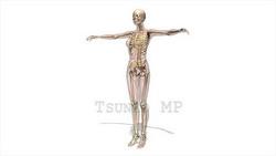 映像CG 人体模型120430-013