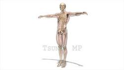映像CG 人体模型120430-004