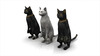 CG Cats120401-002
