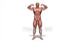 映像CG 筋肉マン Muscle120427-009