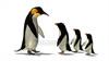 CG  Penguin120421-007