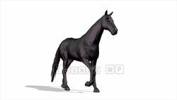 CG  Horse120324-005