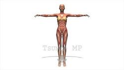 映像CG 人体模型120430-009
