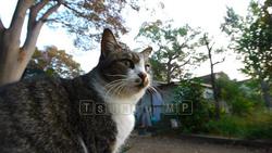 Cat-010
