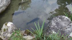 Heritage of Shirakawa-go Gassho houses and pond-6