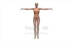 映像CG 人体模型120430-010